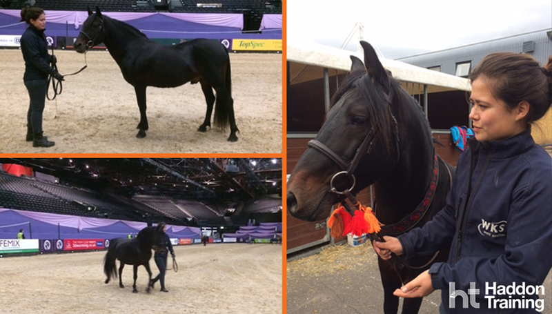 ophie Goodchild Caspian display at HOYS
