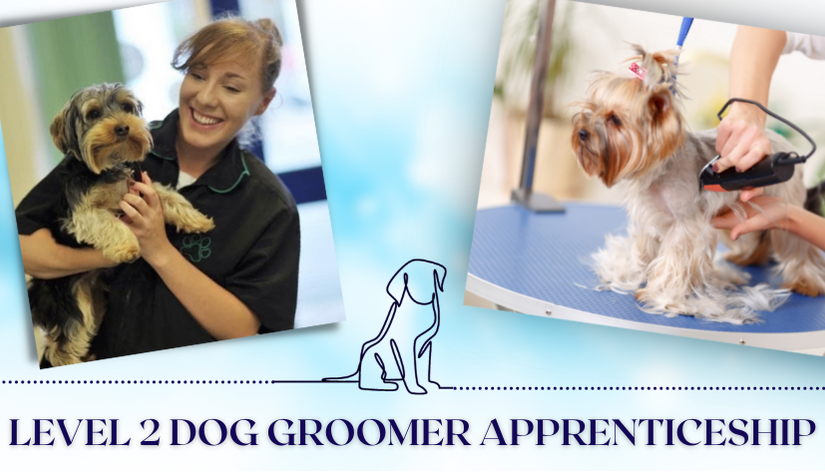 Dog Groomer apprenticeship